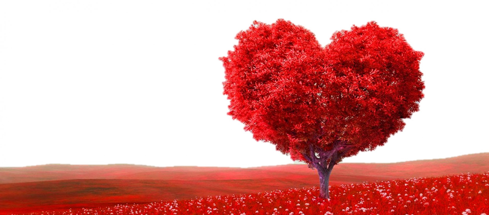 Notre sélection Saint-Valentin